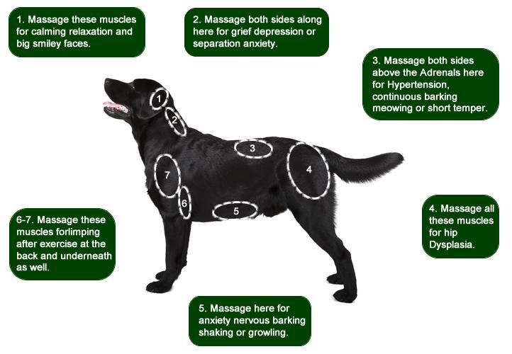 Massage Dog Ears